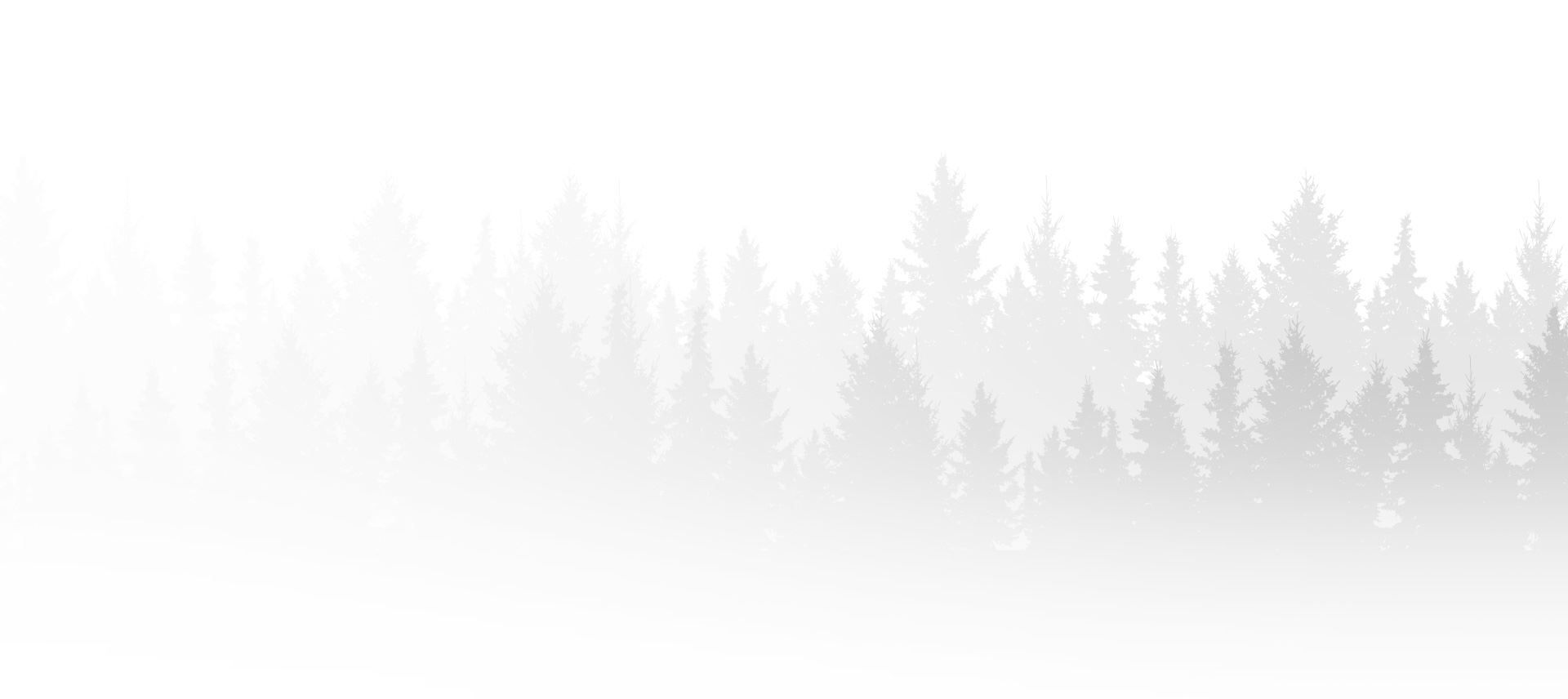pine trees illustration in the mist